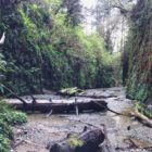 fern canyon, humboldt, california, ferns, river, canyon